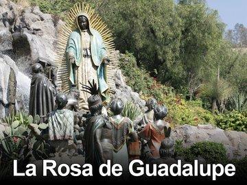 La Rosa De Guadalupe Cast